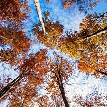 IV Bieg BiegamBoLubię Lasy w Nadleśnictwie Lubartów