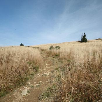 Bojko Trail 120+